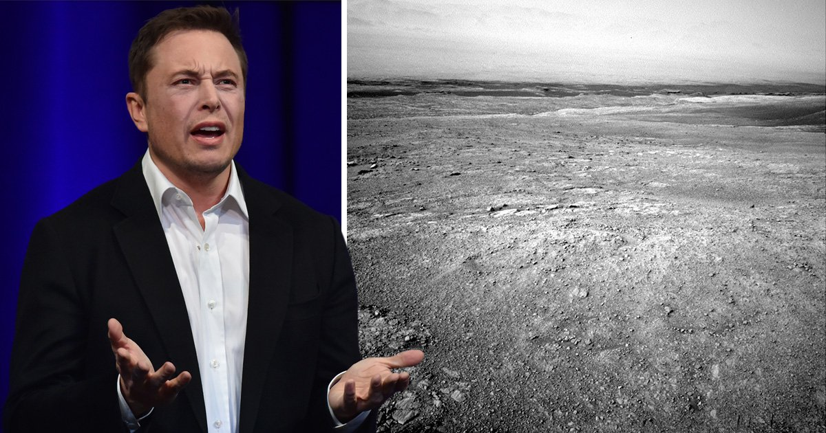UFO hunter claims to have seen 'alien robot creatures' on Mars – and thinks Elon Musk sent them