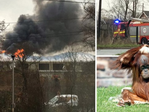 Chester Zoo investigators confirm what started massive fire that killed animals
