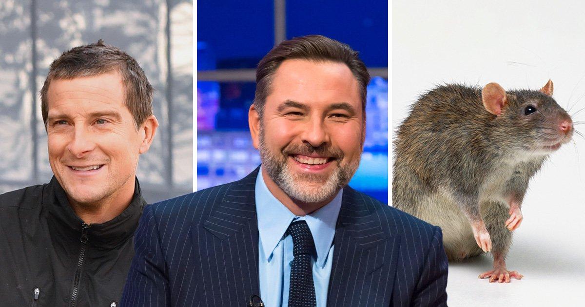 David Walliams complains rat tastes of poo – after Bear Grylls made him eat one
