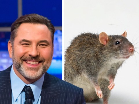 David Walliams complains rat tastes of poo – after Bear Grylls made him eat one
