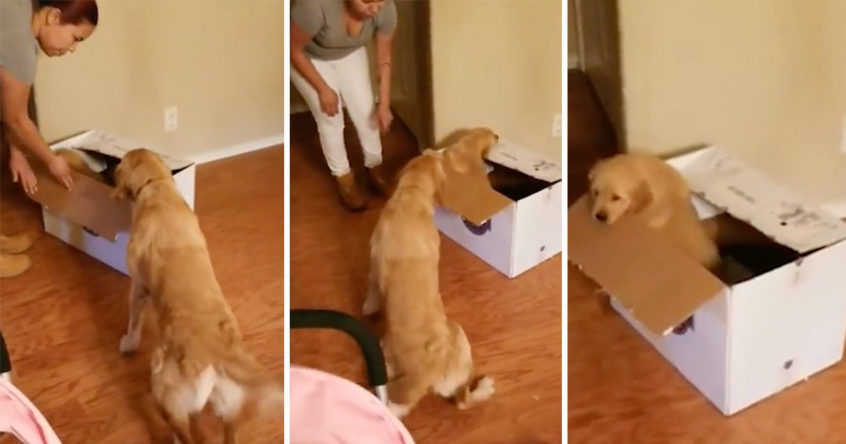 Dog opens Christmas present to find his very own puppy inside