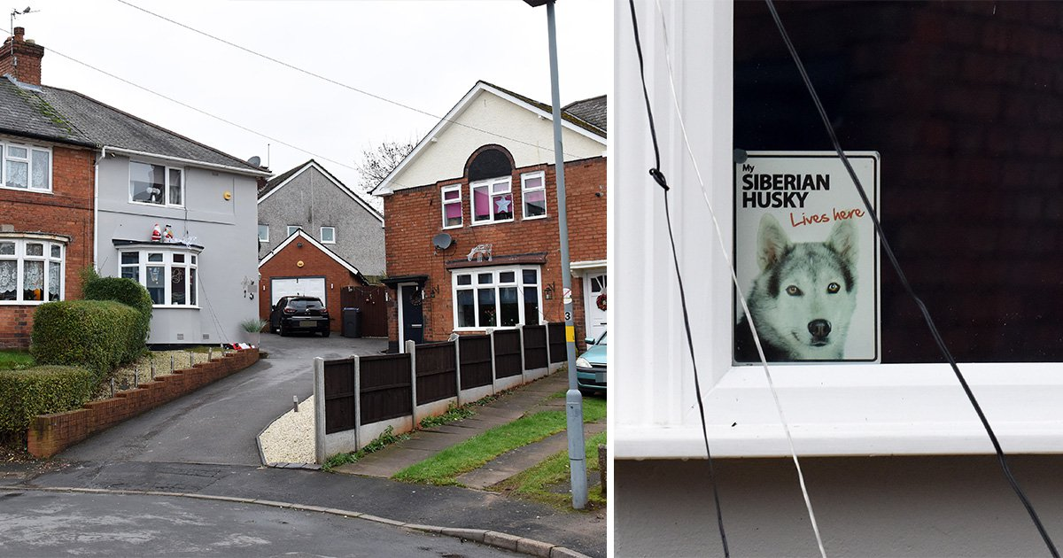 Dog shot dead by police after mauling woman in the middle of the night