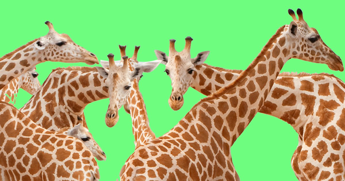 Giraffes are now added to endangered list :(((((