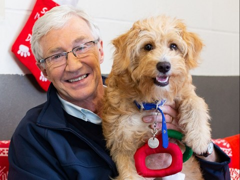 Paul O'Grady left heartbroken over 'tiny puppies with broken legs' at Battersea Dogs Home