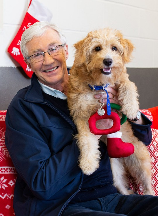 EMBARGOED PICTURE : FOR PUBLICATION FROM Tuesday 11th December 2018 From ITV studios PAUL OGRADY FOR THE LOVE OF DOGS AT CHRISTMAS Tuesday 25th December 2018 on ITV Pictured: Paul O'Gardy with dog Boo Paul O'Grady returns to Battersea Dogs and Cats Home in an one-hour special of 'For The Love of Dogs at Christmas'. Paul faces his biggest challenge yet as he tries to find homes for dozens of dogs who've all arrived together. Top of Paul?s Christmas list is a west highland terrier called Sylvester who is very withdrawn and needs to brought out of his shell. Paul enlists the help of a beautiful bichon frise called Harlow, who becomes Battersea's resident 'therapy dog for dogs' to help him spread festive joy. Paul also helps to bottle feed two three week old puppies who were found dumped on the side of the road having been thrown out of a moving car. He also meets a 10 week old malinois cross who is too energetic and in need of attention to live in a family home, so Paul needs to help find her a job in time for Christmas. (C) Battersea Dogs Home For further information please contact Peter Gray 0207 157 3046 peter.gray@itv.com This photograph is ? Battersea Dogs Home and can only be reproduced for editorial purposes directly in connection with the programme PAUL OGRADY FOR THE LOVE OF DOGS AT CHRISTMAS or ITV. Once made available by the ITV Picture Desk, this photograph can be reproduced once only up until the Transmission date and no reproduction fee will be charged. Any subsequent usage may incur a fee. This photograph must not be syndicated to any other publication or website, or permanently archived, without the express written permission of ITV Picture Desk. Full Terms and conditions are available on the website www.itvpictures.com
