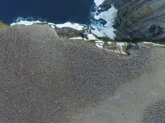 Nasa spots pink poo from space - turns out to be a hidden colony of penguins Thomas Sayre McChord, Hanumant Singh, Northeastern University, ? Woods Hole Oceanographic Institution Credit: Woods Hole Oceanographic Institution
