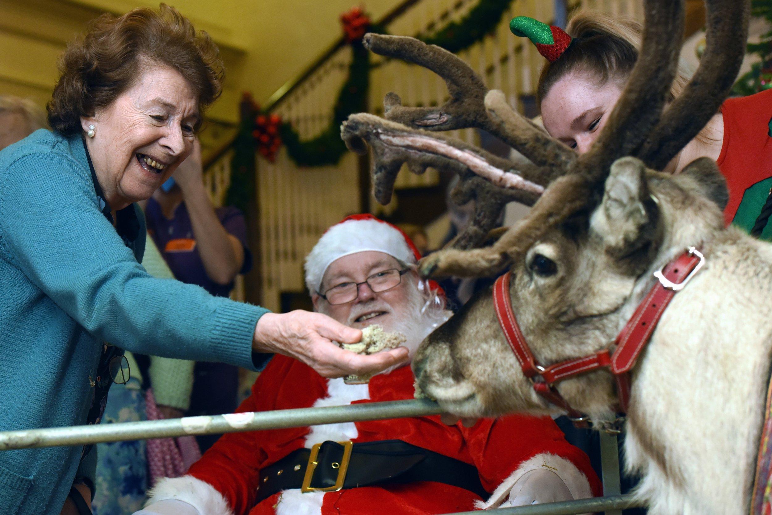 Sunrise Senior Living, Edgbaston, Birmingham, where Rudolph the reindeer was visiting the residents. Barbara Fox, aged 88, left, enjoys feeding moss the reindeer.