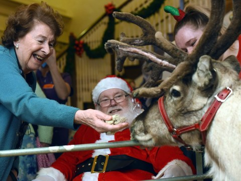 Every year reindeer visit a care home to bring festive cheer to elderly residents