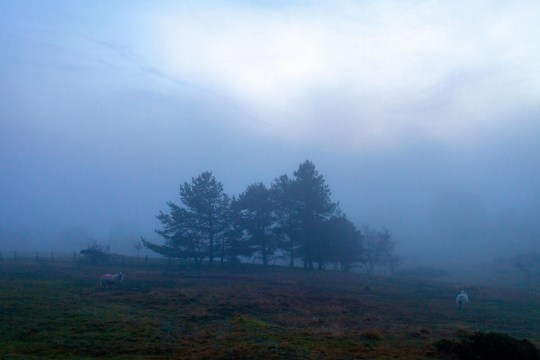 Alamy Live News. R9GEXJ Flintshire, North, UK. 24th Dec, 2018. UK Weather: Colder conditions over the coming days as a cold front moves southwards from Scotland. A cold and foggy landscape on Halkyn Mountain near the village of Halkyn Credit: DGDImages/Alamy Live News This is an Alamy Live News image and may not be part of your current Alamy deal . If you are unsure, please contact our sales team to check.