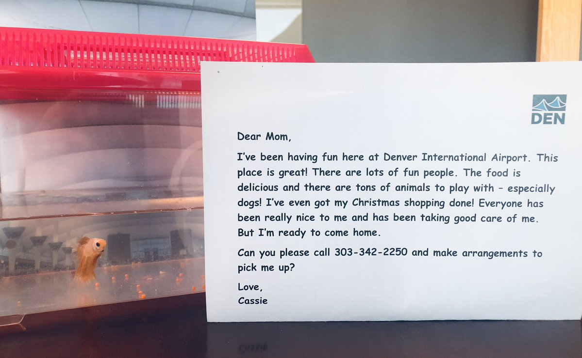 Southwest Airlines took care of a pet fish after its abandonment on an airport concourse