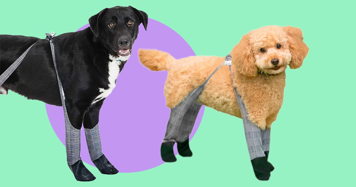 The weather outside is frightful, but these dog leggings are delightful