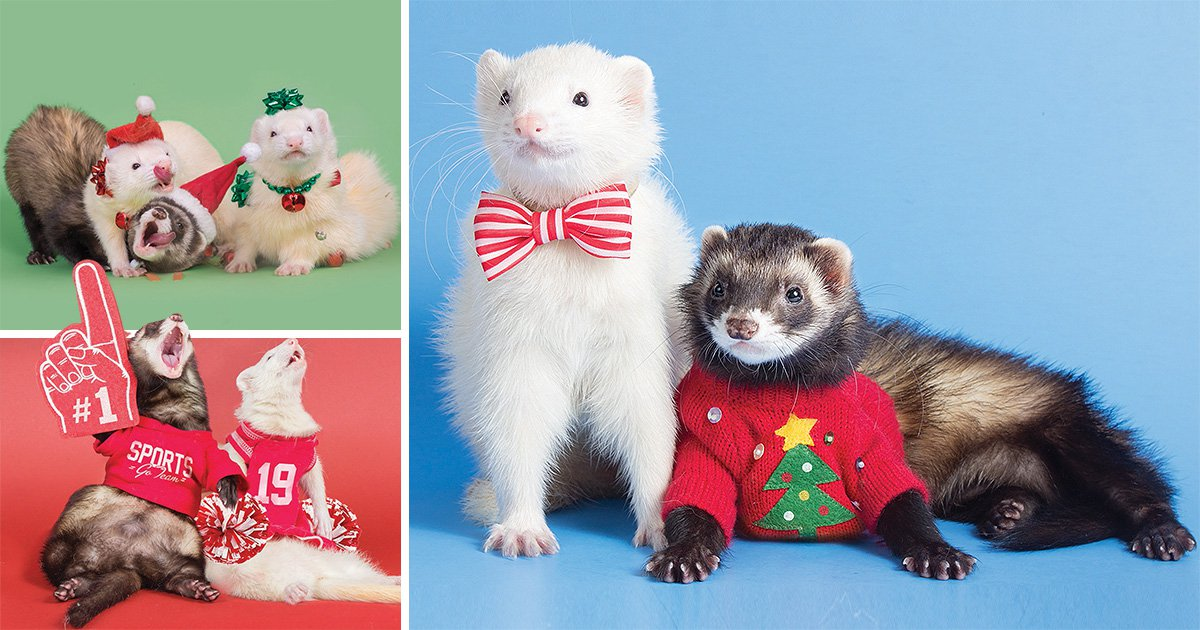 Moose the four-year-old ferret has his very own adorable 2019 calendar