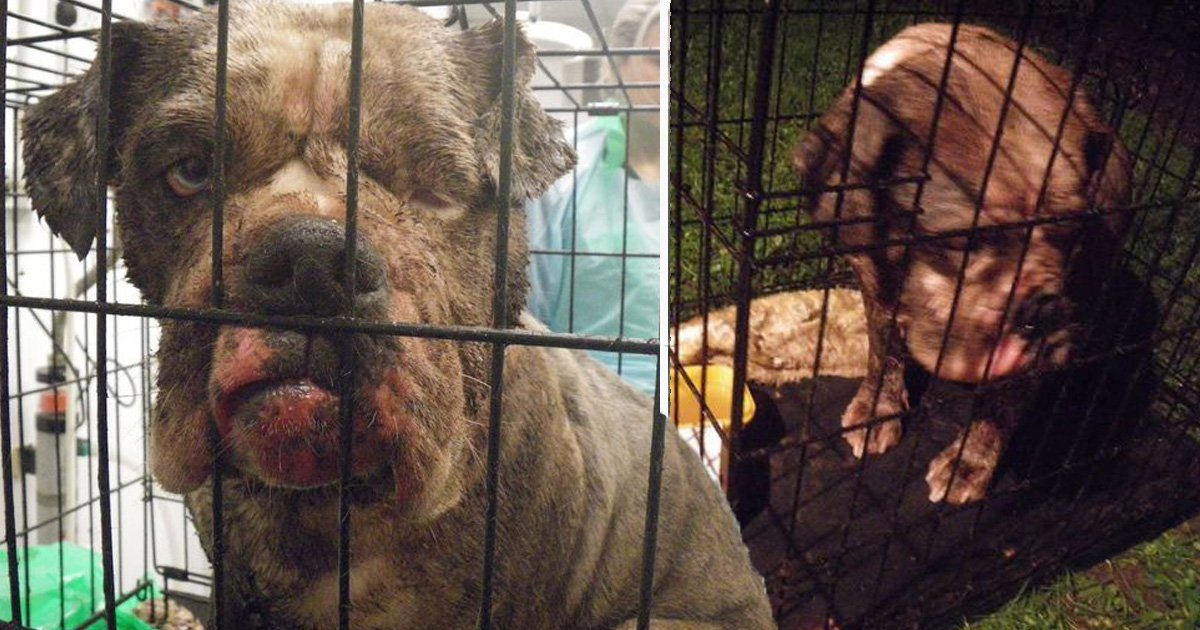 Pregnant dog abandoned in alley found carrying dead puppy
