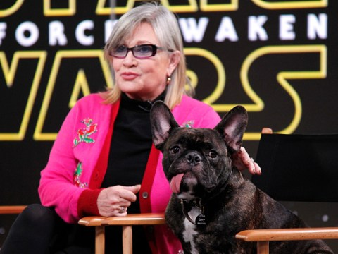 Carrie Fisher's beloved dog Gary 'retires' to the coast of Florida but 'still misses mum every day'