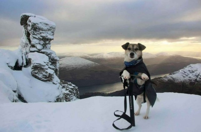 Claunie at the top of Ben Arthur in Argyll and Bute STUNNING photos show dogs posing at the top of various Scottish summits, which has now become the latest social media trend. The images, which were uploaded to different hillwalking and countryside groups on social media in recent months, show the dogs looking proud as punch overlooking the mountainous backdrop. Majority of these posts has received a huge response on social media with Facebook users loving the latest trend. One of the most amazing pictures shows John Sloan?s dog, Skye, on the ?devil's staircase? on the West Highland Way. John's border collie Skye, who has now passed away STUNNING photos show dogs posing at the top of various Scottish summits, which has now become the latest social media trend. The images, which were uploaded to different hillwalking and countryside groups on social media in recent months, show the dogs looking proud as punch overlooking the mountainous backdrop. Majority of these posts has received a huge response on social media with Facebook users loving the latest trend. One of the most amazing pictures shows John Sloan?s dog, Skye, on the ?devil's staircase? on the West Highland Way.