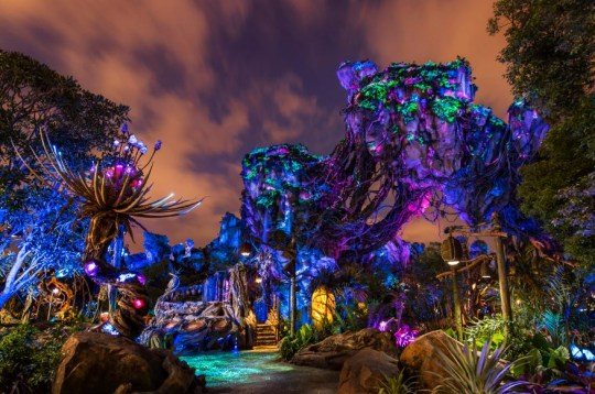 15 experiences you need to have at Walt Disney World Resort