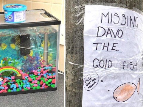 Have you seen Dave the goldfish missing since New Year's Day?