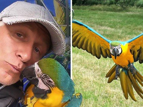 Hunter shot man's pet parrot because 'it's not illegal to shoot exotic birds'
