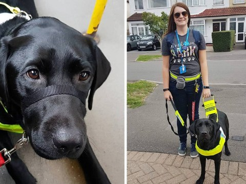 Blind woman told to get off bus 'because guide dogs can't be black'