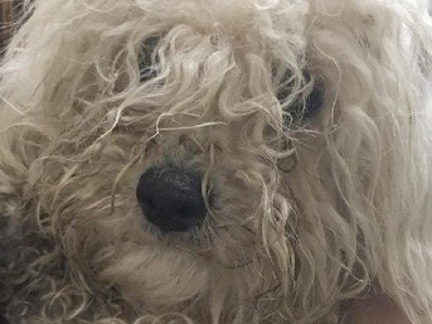 Dumped dogs get much-needed transformation after fur was so matted they couldn't move