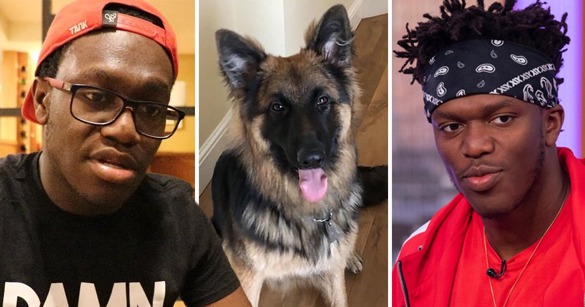 YouTube star Deji to face court over 'dangerous dog'