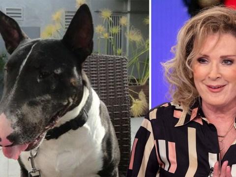 Coronation Street star Beverley Callard reveals heartbreak at death of beloved dog Trev