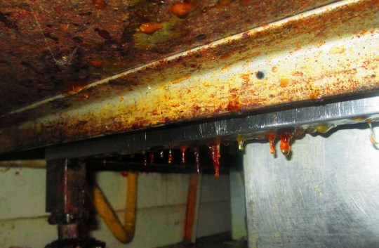 Mouse Poo Grease And Filth Found In Disgusting Pizza