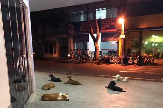 2. The aniimals settled down for the night and kept vigil outside the hospital entrance. Image Amigos de Patas - FocusOn News
