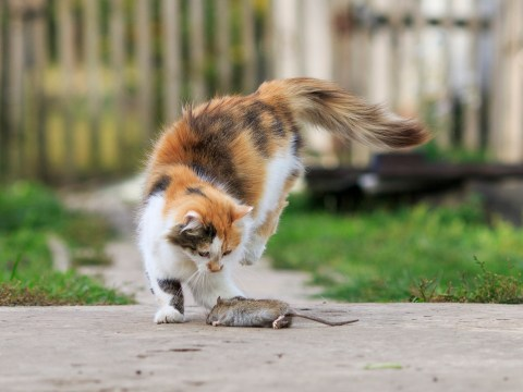 Cat owners worry about wildlife hunting – but don't want to 'curb instinct'