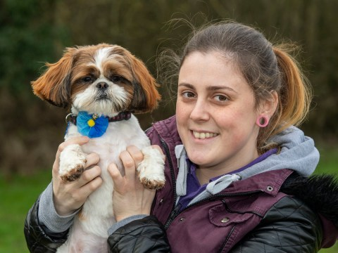 Animal rescue centre asks public for donations to help shih tzu run again