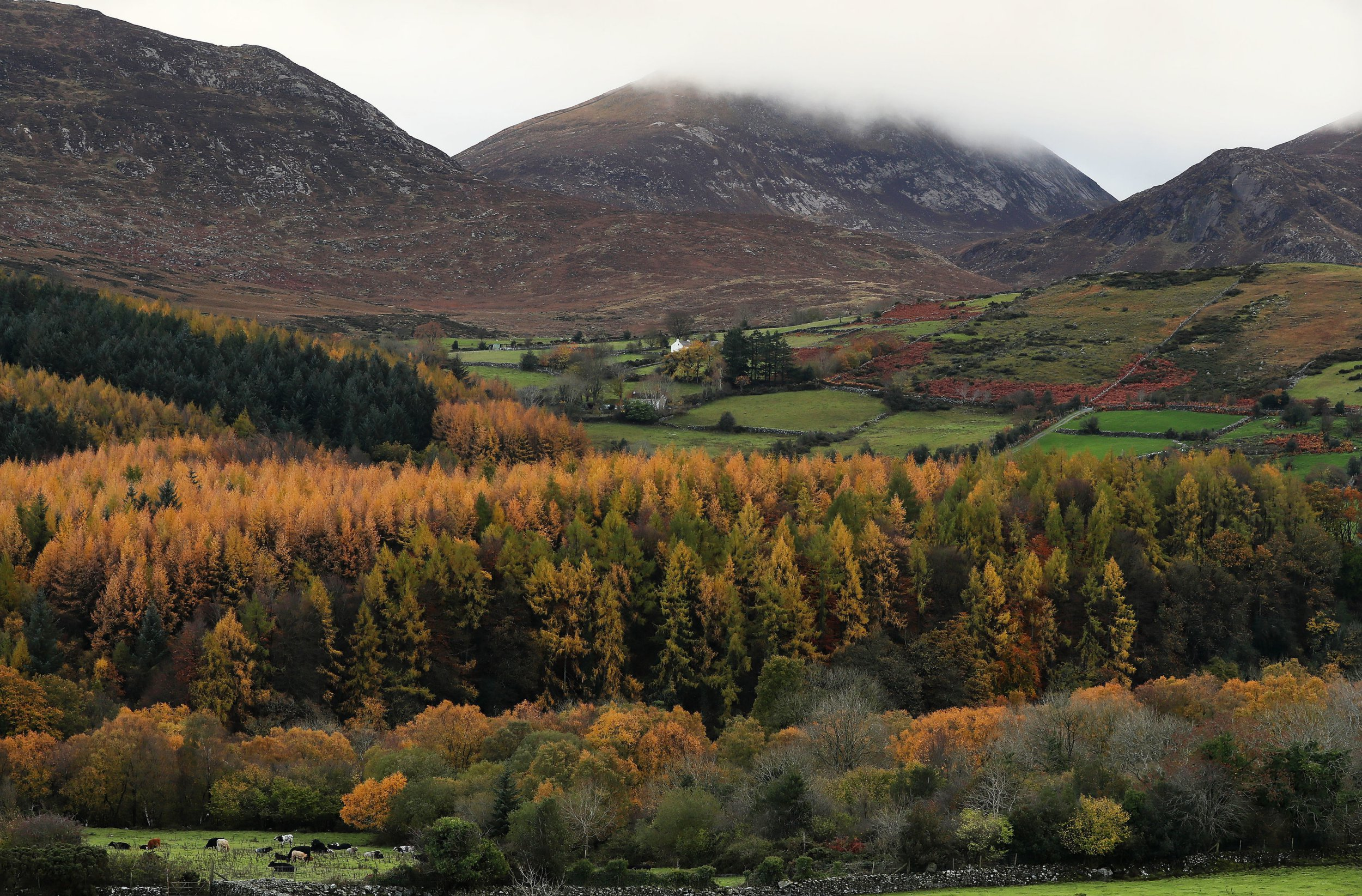 """Embargoed to 0001 Friday December 07 File photo dated 7/11/2018 of the Tollymore Forest park at the foot of the Mourne mountains in Bryansford, Co. Down. Natural ways of reducing carbon emissions to zero including restoring native woodlands are better than """"science fiction"""" climate schemes such as mirrors in space, a charity has urged."""
