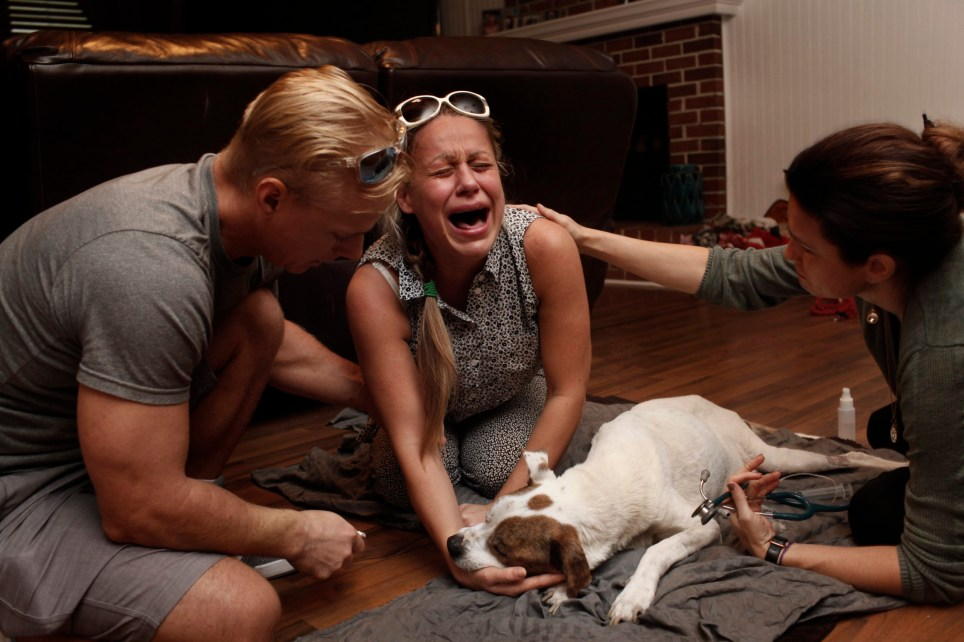 Photographer, Ross Taylor, documents the 'Last Moments' with owners and their beloved pets in a series of heartbreaking photographs