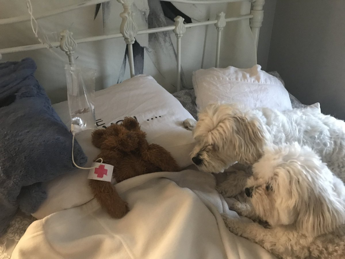 Dad sets up makeshift hospital for dog's favourite toy after it was left outside