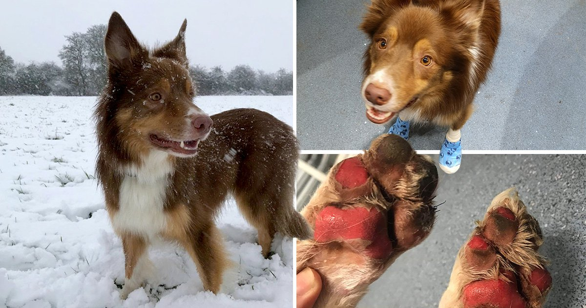 Warning after dog's paws were burned off when he walked on icy grass