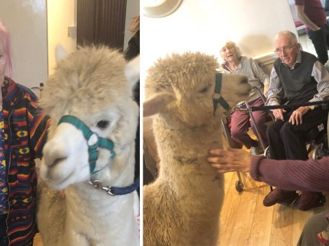 Alpacas visit care home to help elderly residents with dementia