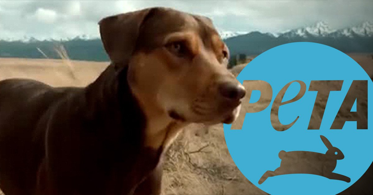 Peta being sued by owners of Dog's Way Home star Bella over 'smear campaign'