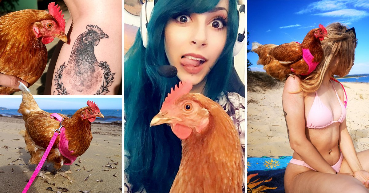 Woman is best friends with a chicken – and they even sunbathe together