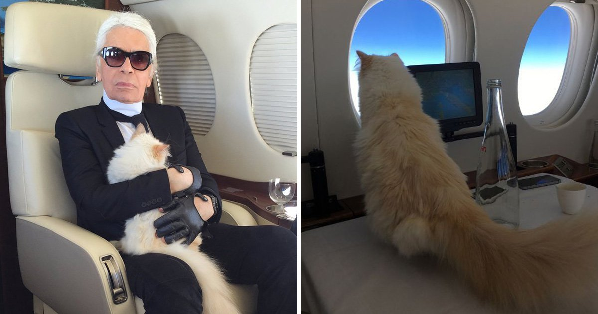 Karl Lagerfeld's beloved cat Choupette 'to inherit' £150 million fortune following death of designer at 85
