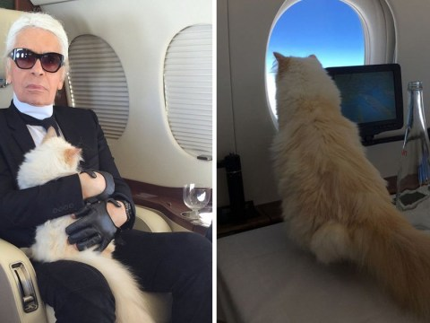 To the end, Karl Lagerfeld had one true love – his beloved cat Choupette