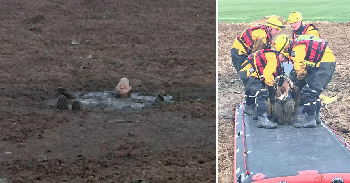 Dog walker saved after getting stuck neck-deep in manure while out with his pet