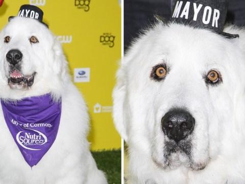 Duke, the former dog mayor of a Minnesota village, dies months after retiring