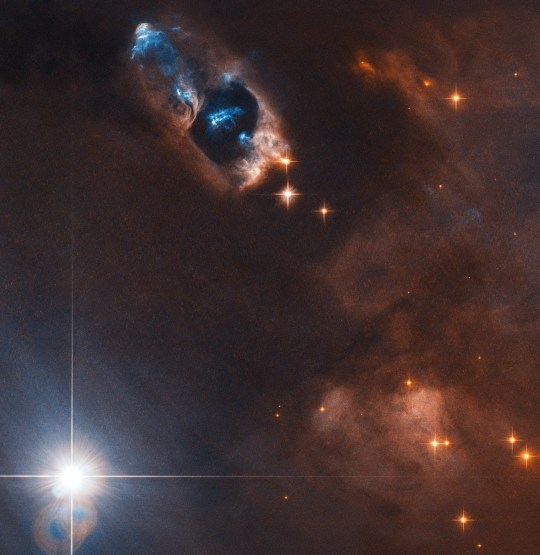 (Picture: ESA/Hubble/NASA) In this image the NASA/ESA Hubble Space Telescope has captured the smoking gun of a newborn star, the Herbig???Haro objects numbered 7 to 11 (HH 7???11). These five objects, visible in blue in the top centre of the image, lie within NGC 1333, a reflection nebula full of gas and dust found about a thousand light-years away from Earth. Herbig-Haro objects like HH 7???11 are transient phenomena. Travelling away from the star that created them, at a speed of up to 250 000 kilometres per hour they disappear into nothingness within a few tens of thousands of years. The young star that is the source of HH 7-11 is called SVS 13 and all five objects are moving away from SVS 13 toward the upper left. The current distance between HH 7 and SVS 13 is about 20 000 times the distance between Earth and the Sun. Herbig???Haro objects are formed when jets of ionised gas ejected by a young star collide with nearby clouds of gas and dust at high speeds. The Herbig-Haro objects visible in this image are no exception to this and were formed when the jets from the newborn star SVS 13 collided with the surrounding clouds. These collisions created the five brilliant clumps of light within the reflection nebula.