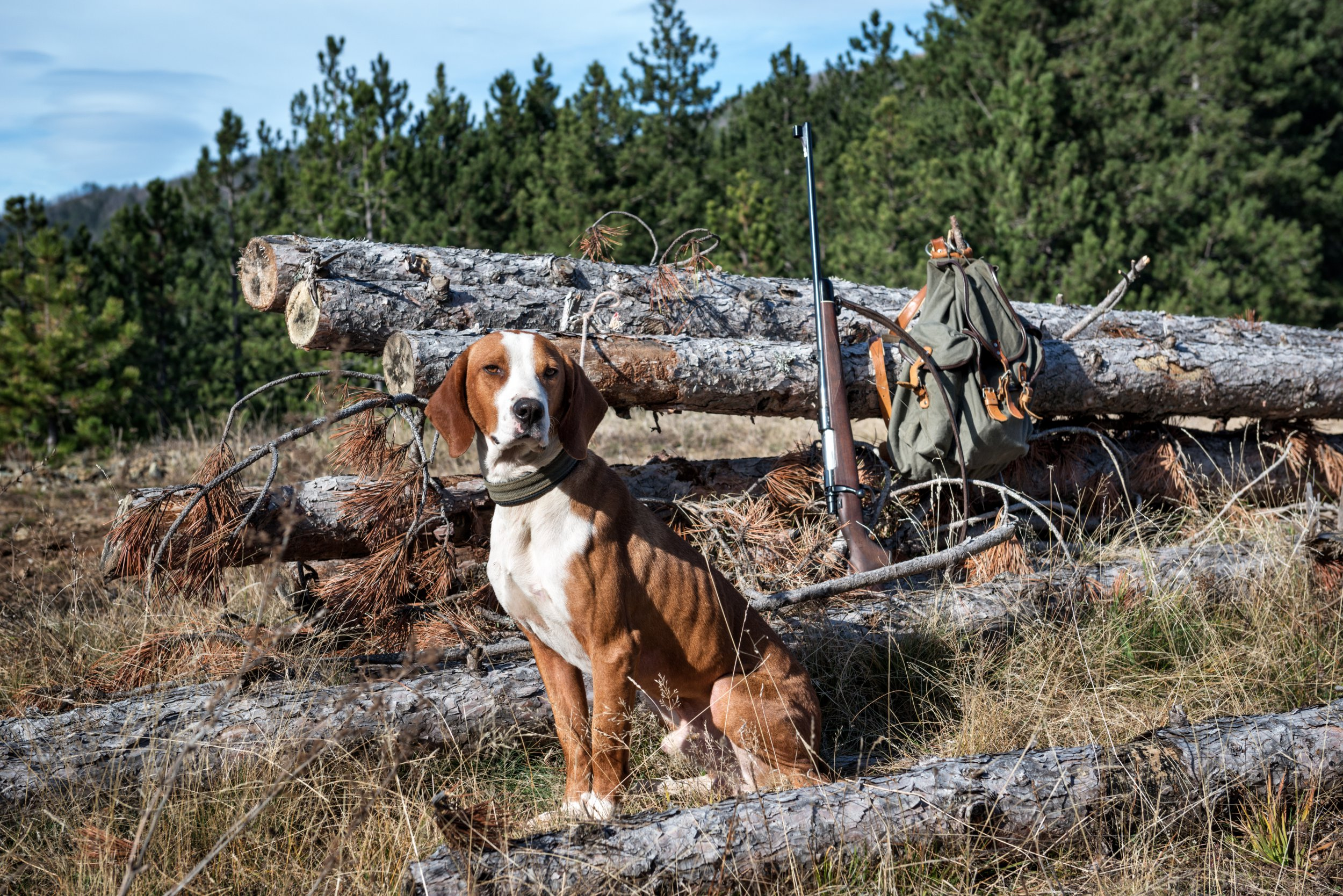 Hunting dog guarding the hunter's equipment in the woods.