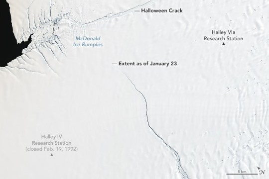 Cracks growing across Antarctica???s Brunt Ice Shelf are poised to release an iceberg with an area about twice the size of New York City. It is not yet clear how the remaining ice shelf will respond following the break, posing an uncertain future for scientific infrastructure and a human presence on the shelf that was first established in 1955. The cracks are apparent by comparing these images acquired with Landsat satellites. The Thematic Mapper (TM) on Landsat 5 obtained the first image (left) on January 30, 1986. The second image (right), from the Operational Land Imager (OLI) on Landsat 8, shows the same area on January 23, 2019. The crack along the top of the January 23 image???the so-called Halloween crack???first appeared in late October 2016 and continues to grow eastward from an area known as the McDonald Ice Rumples. The rumples are due to the way ice flows over an underwater formation, where the bedrock rises high enough to reach into the underside of the ice shelf. This rocky formation impedes the flow of ice and causes pressure waves, crevasses, and rifts to form at the surface. The more immediate concern is the rift visible in the center of the image. Previously stable for about 35 years, this crack recently started accelerating northward as fast as 4 kilometers per year. January 23, 2019 The detailed view shows this northward expanding rift coming within a few kilometers of the McDonald Ice Rumples and the Halloween crack. When it cuts all the way across, the area of ice lost from the shelf will likely be at least 1700 square kilometers (660 square miles). That???s not a terribly large iceberg by Antarctic standards???probably not even making the top 20 list. But it may be the largest berg to break from the Brunt Ice Shelf since observations began in 1915. Scientists are watching to see if the loss will trigger the shelf to further change and possibly become unstable or break up. ???The near-term future of Brunt Ice Shelf likely de
