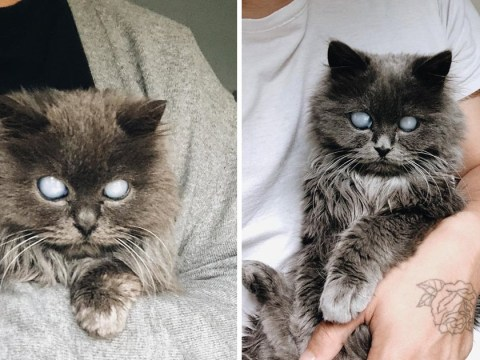 Couple go to animal shelter to choose a cat but a blind cat chooses them