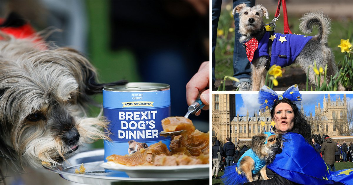 Pet protesters call for second referendum to avoid Brexit 'dog's dinner'