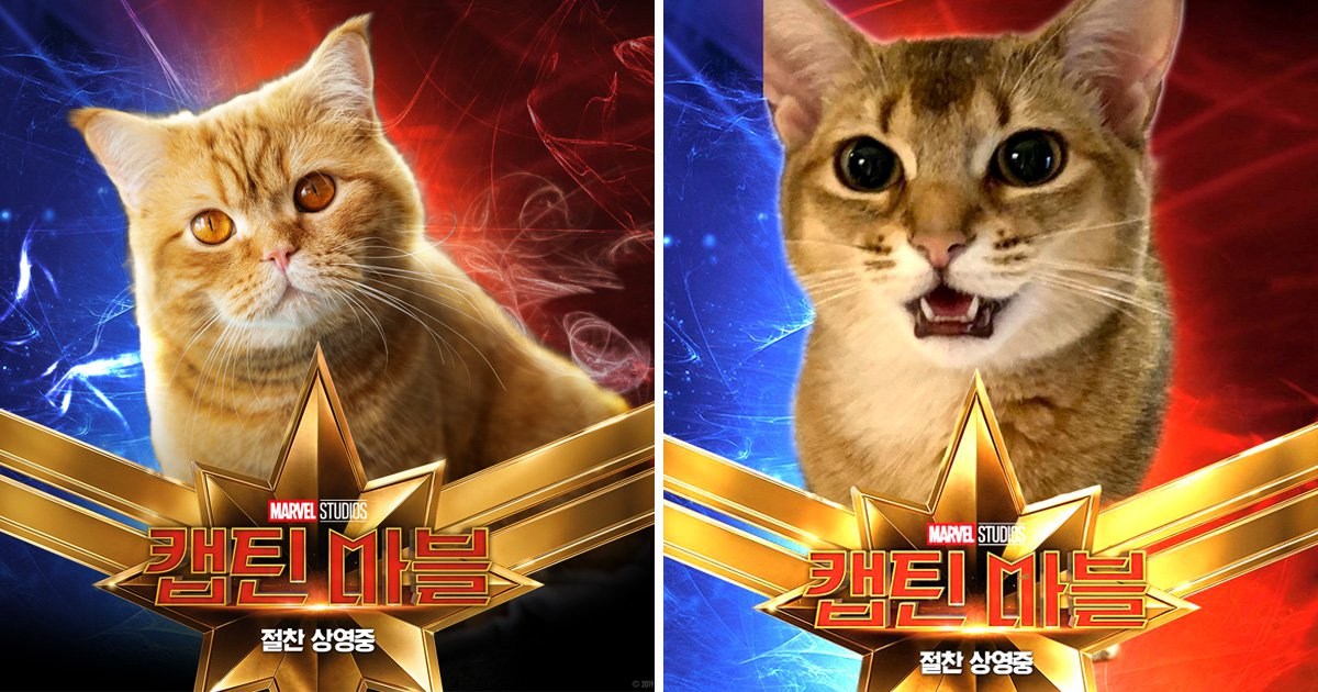 Captain Marvel fans are excellently Photoshopping their cats into the movie poster