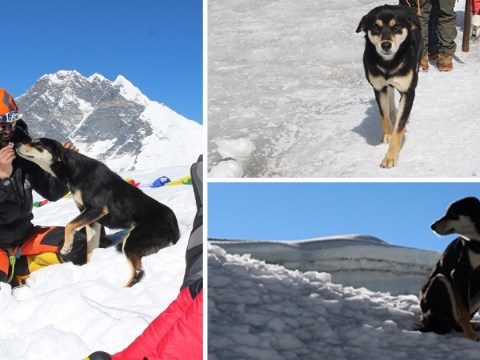 Stray dog climbs 24,000-ft mountain