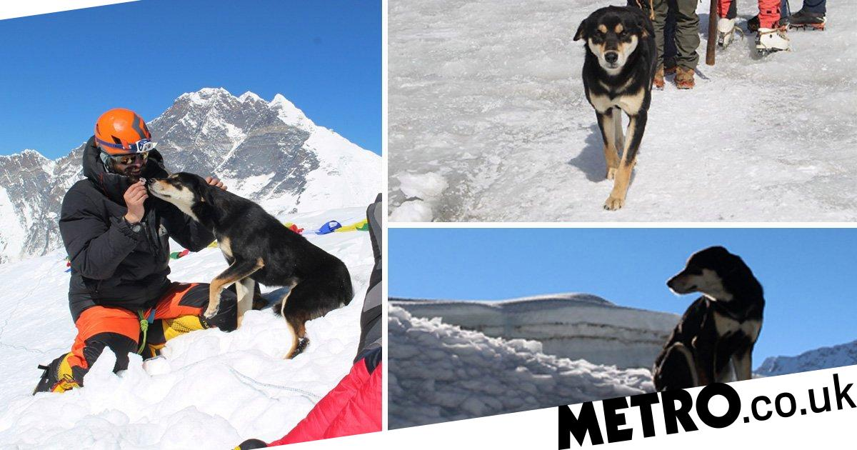Stray dog climbs 24,000-ft mountain