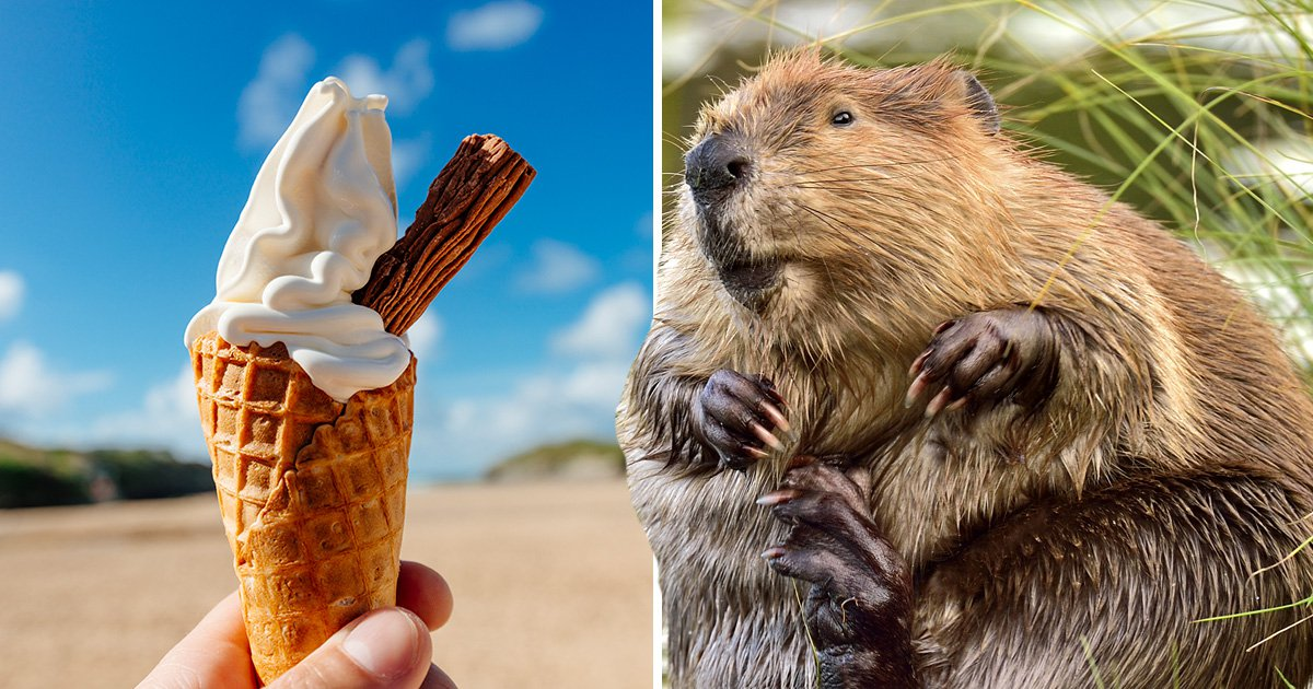 Is there beaver anal secretion in your ice cream?